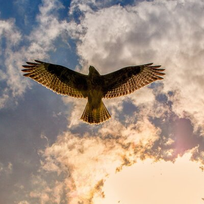Kennis van roofvogels