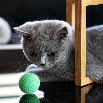 Gedrag van de kat en hersenwerk voor katten