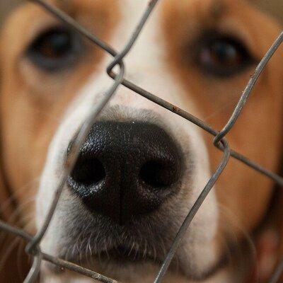 Hersenwerk! Verrijking voor de hond in de opvang