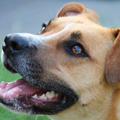 Complexe honden in de opvang