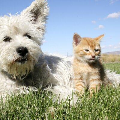 EHBO voor hond en kat