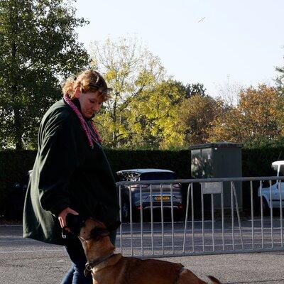 Veilig omgaan met Hoog Risico Honden