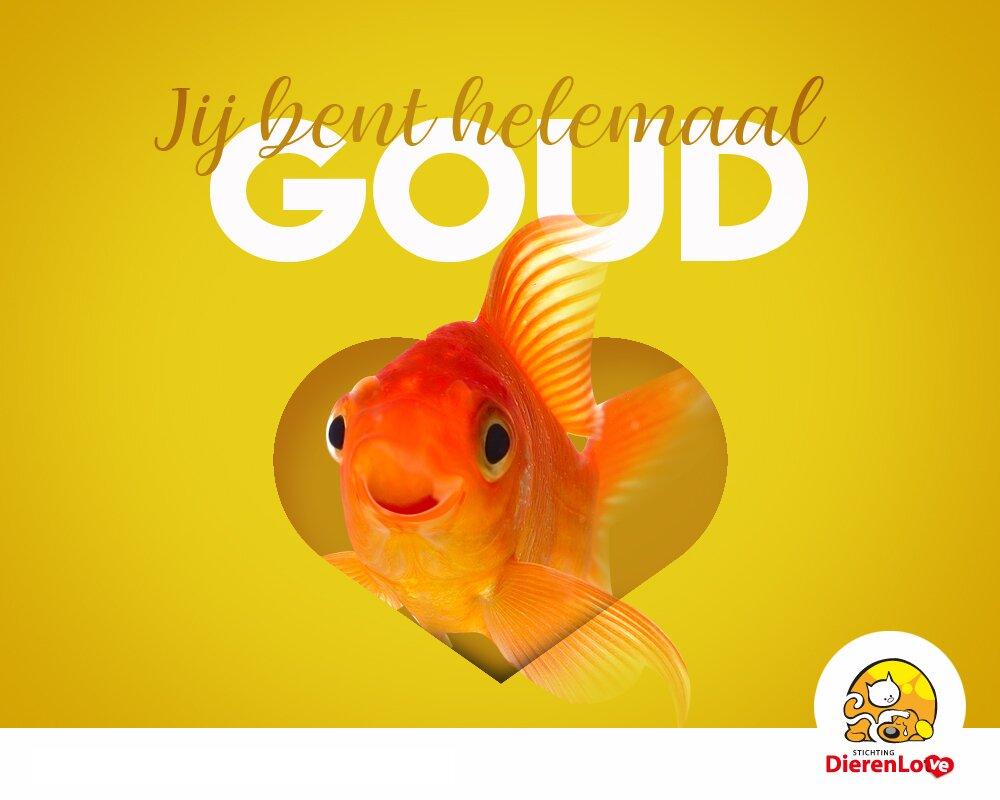 Jij bent helemaal goud