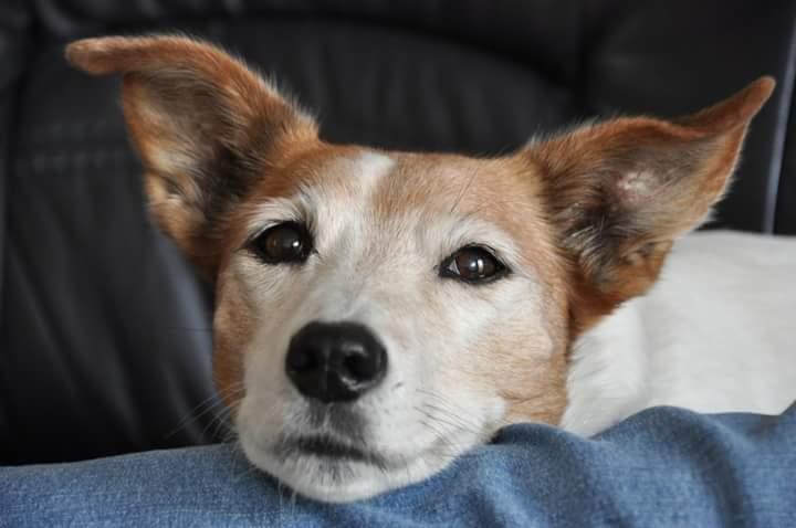 Hoe kan je een oorontsteking bij je hond voorkomen?