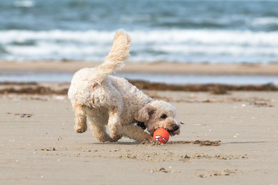 Geschikt speelgoed voor je hond