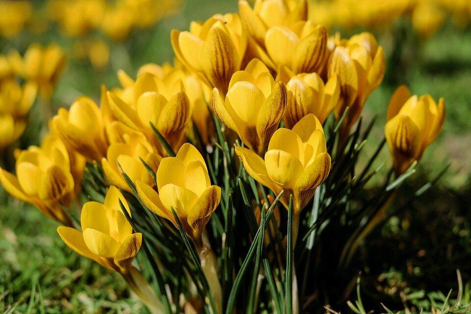 Deze bloemen zijn gevaarlijk voor je viervoeter