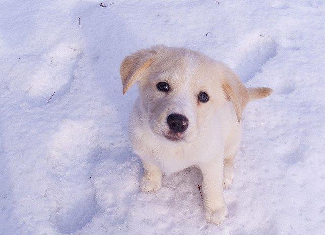 Help je hond de winter door