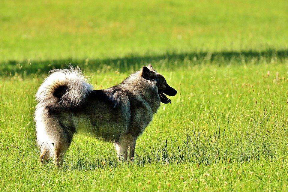 Losloopgebieden voor honden