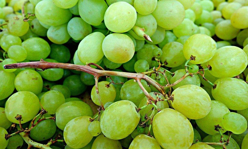 Vergiftiging door druiven en rozijnen