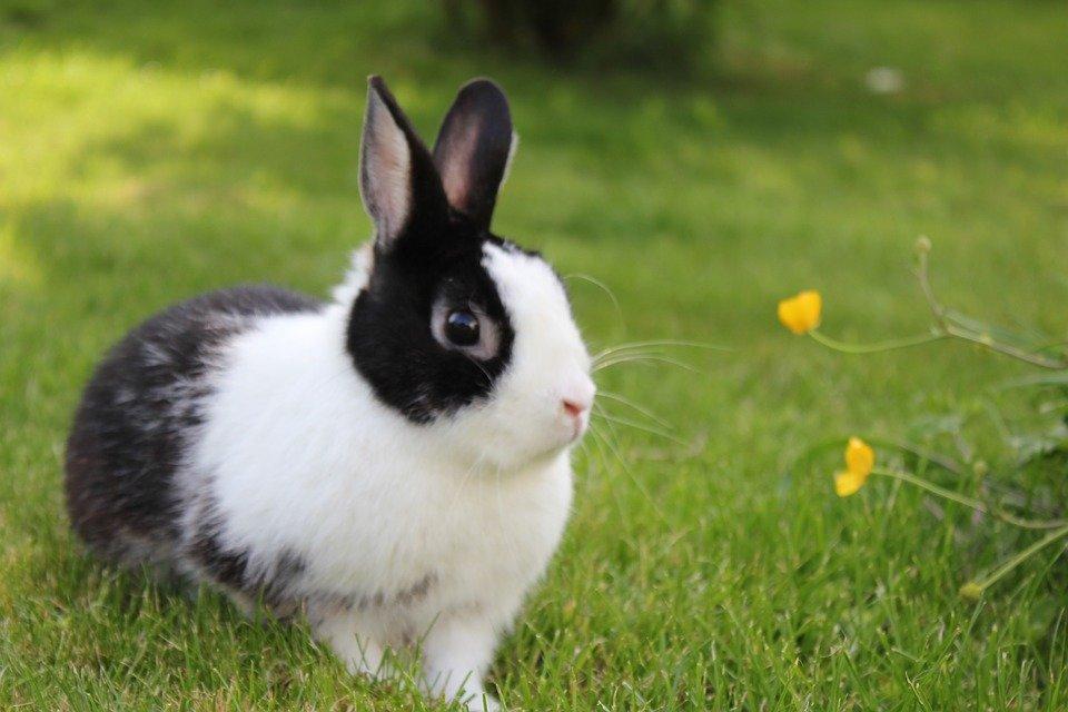Welke groente voersoorten mag mijn konijn?