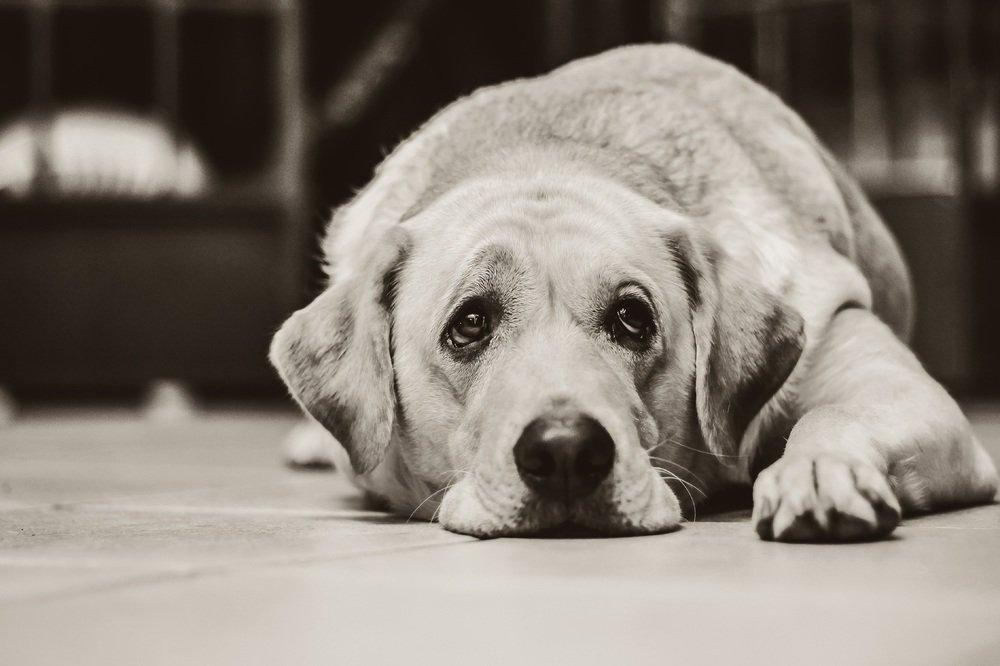 Je huisdier en een trauma