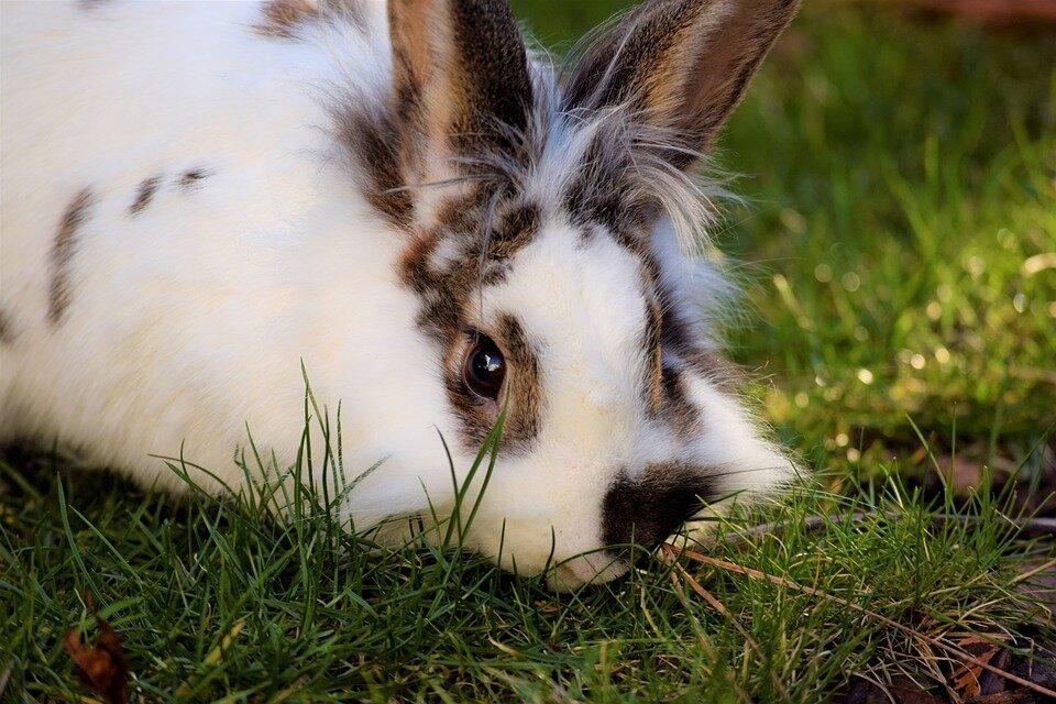 Verzorging van konijnen