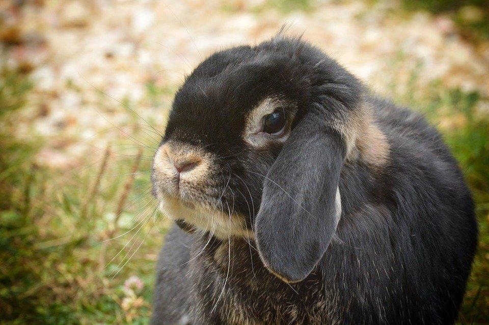 Tips voor konijnen op warme dagen