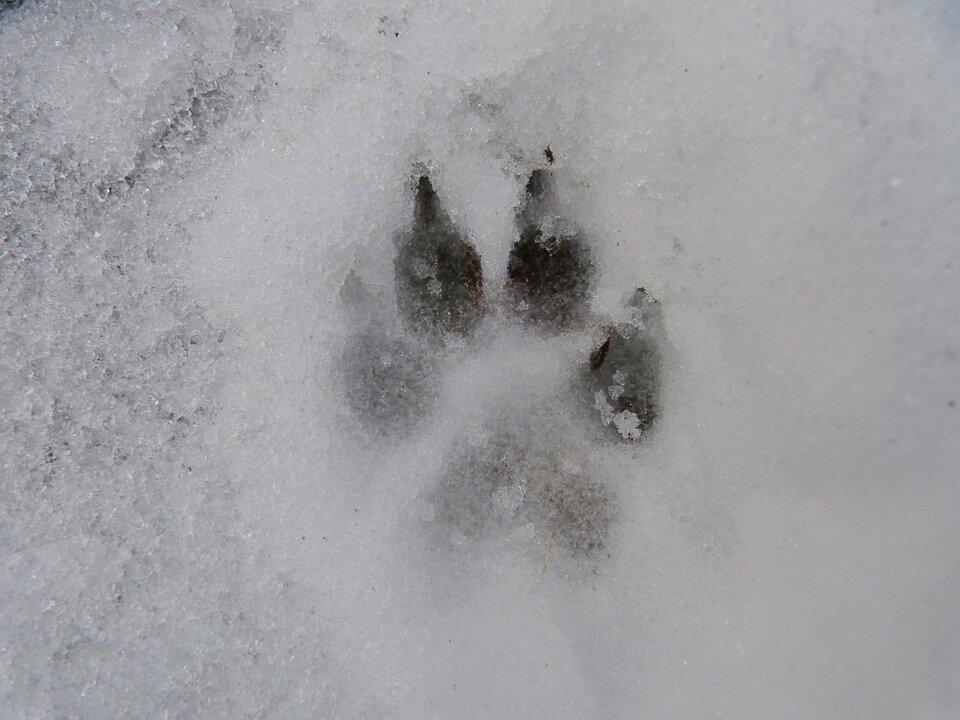 Tips voor je hond op wintersport