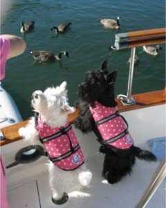 7 veiligheidstips voor varen met je hond