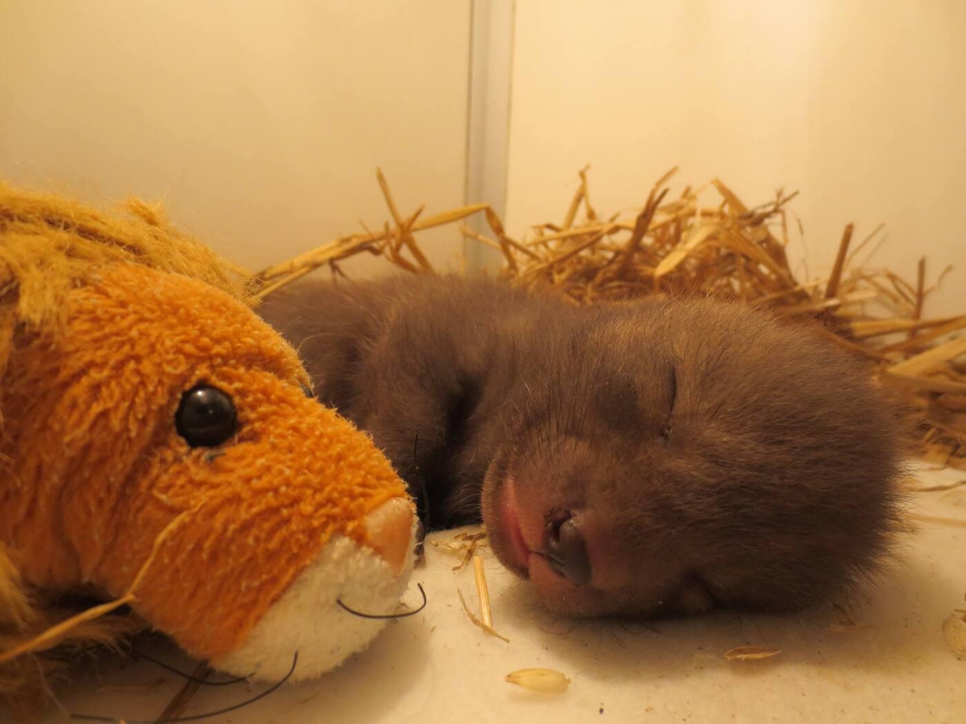 Baby vos in de opvang