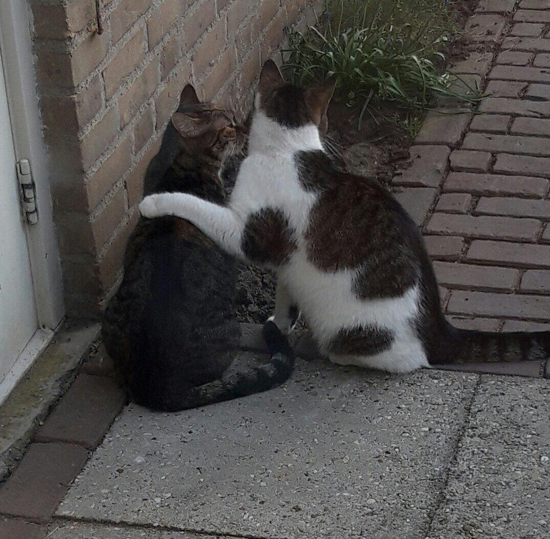 twee katten dikke vrienden
