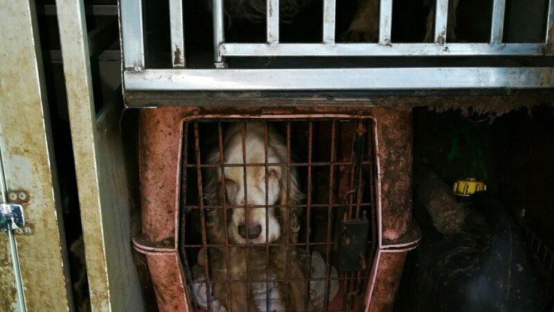 In beslag genomen honden