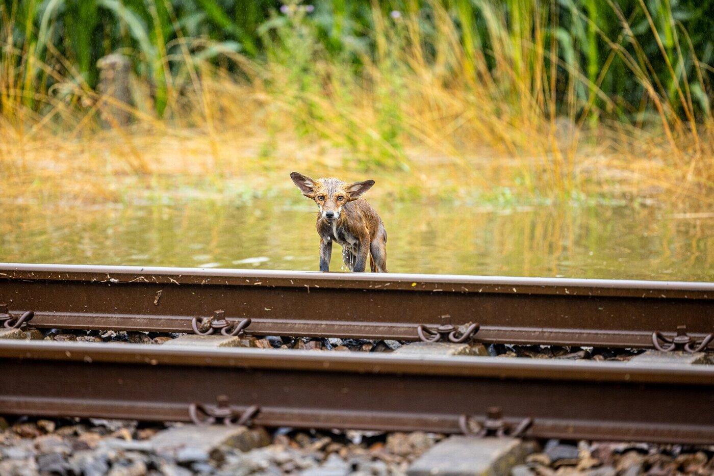 Vos wateroverlast spoor Stefan Verkerk